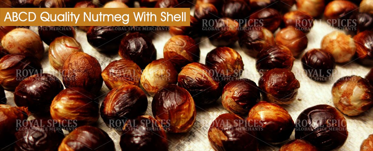 abcd-quality-nutmeg-with-shell