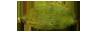 agb-alleppey-green-bold-cardamom-quality