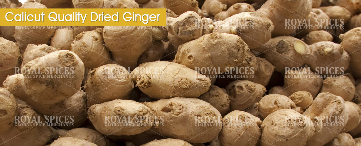 calicut-quality-dried-ginger-from-india