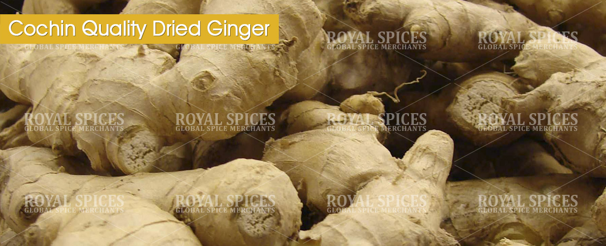 cochin-quality-dried-ginger-from-india