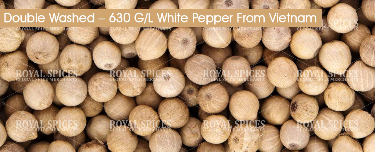 double-washed-630-gl-white-pepper-from-vietnam