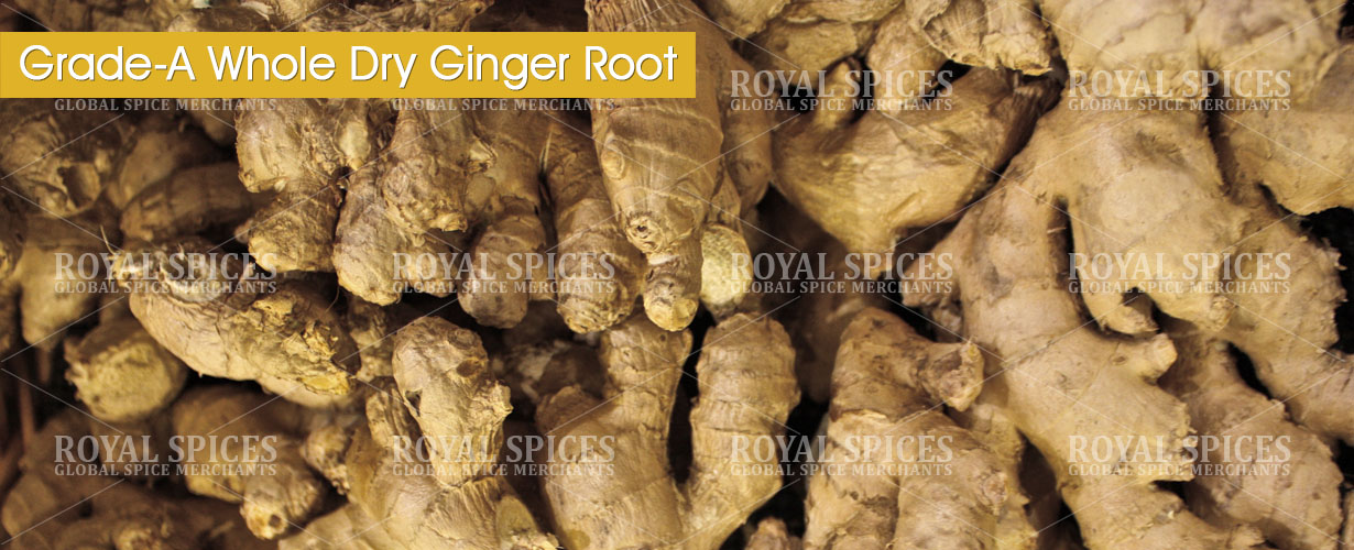 grade-a-whole-dry-ginger-root-from-china