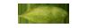 llg-lanka-light-geen-cardamom-small-quality