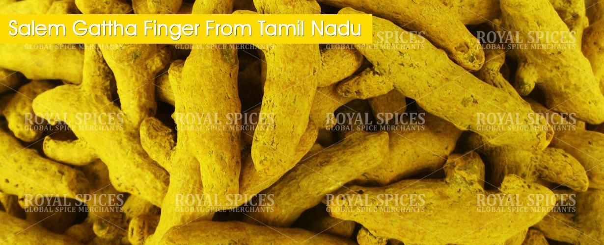 salem-gattha-turmeric-fingers-from-tamil-nadu