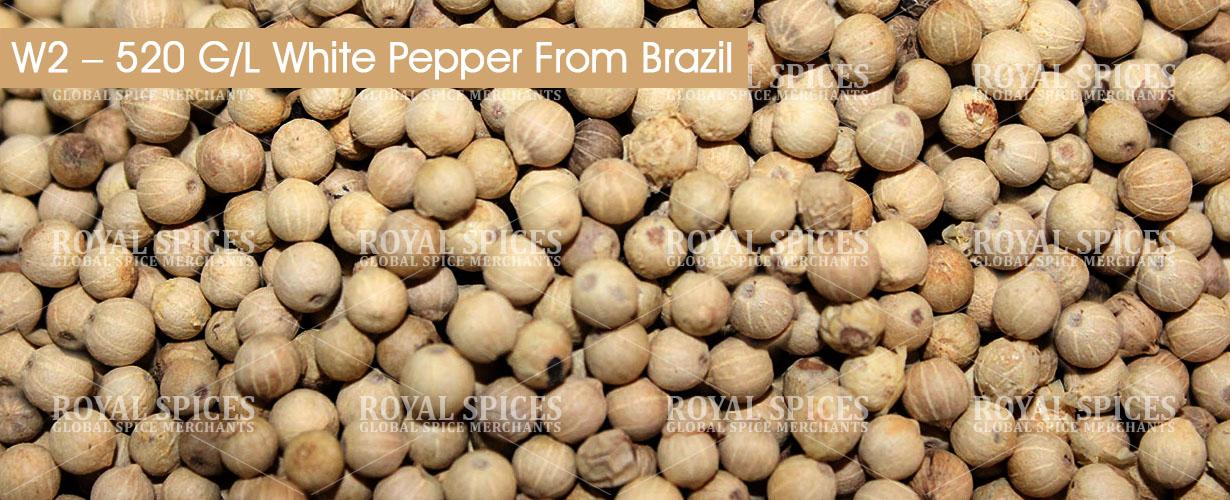 w2-520-gl-white-pepper-from-brazil